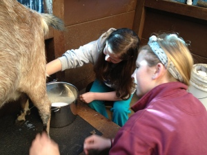 Goat Milking Lesson - Cella