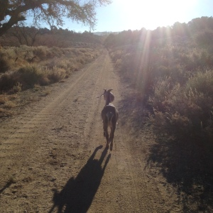 Rupert leads our morning walk at Angeles Crest Creamery